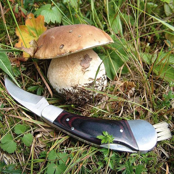 SCHWARZWOLF PILZ houbařský nůž, v pouzdře